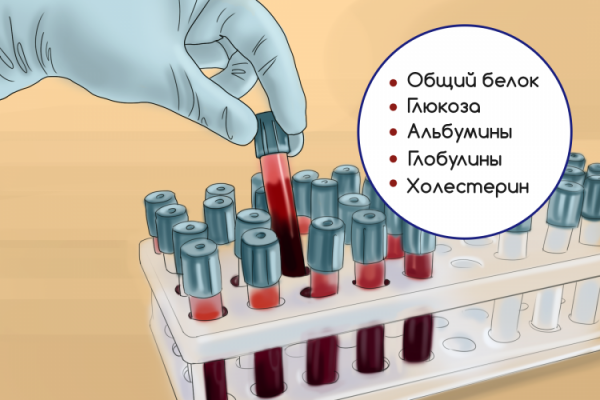 Biochemical analysis of blood: deciphering the